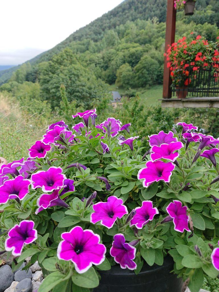 """fleurs de terrasse """"Ostau Era Nheuada"""""""